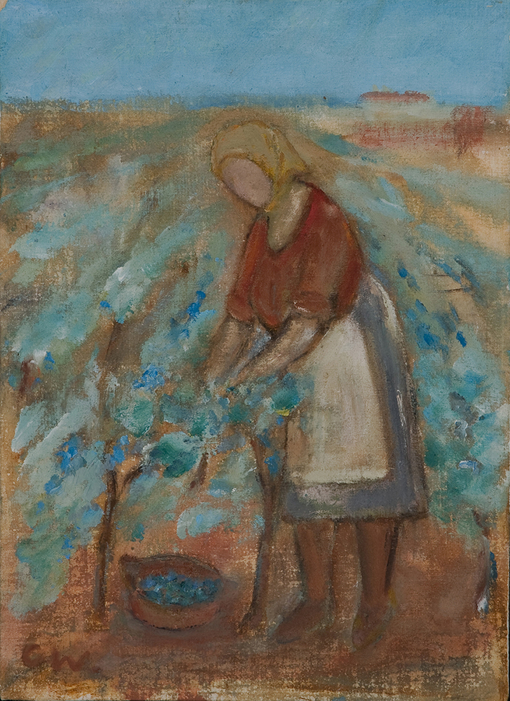 Picking grapes by Colin Williams